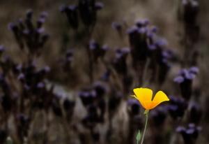 picflower